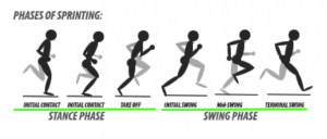 Swing phase of running